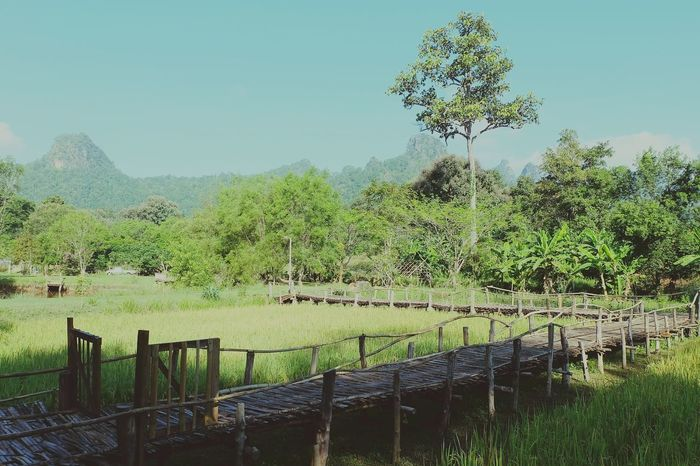 vacation time Chaing Mai, Thailand Chaingdao Comfortable Easily Nature_collection Nature Photography Agriculture Nature Green Color Outdoors Growth Field No People Beauty In Nature