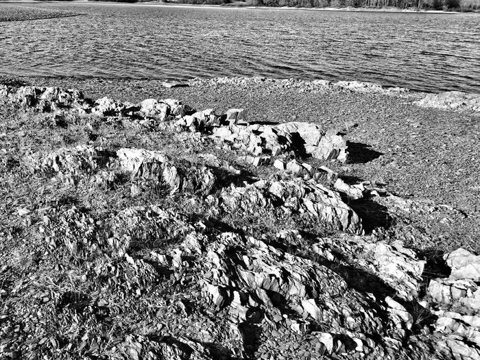 IPhoneography Snapseed Monochrome Nature Textures And Surfaces