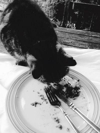 Good Food even my best friend loves it!!!
