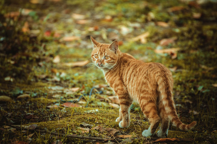 One Animal Animal Themes Nature Outdoors No People Cat