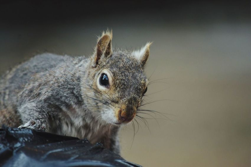 At the park 😀 Check This Out Walking Around Connected With Nature Downtown Brooklyn Street Photography Capture The Moment Taking Photos Animal Portrait