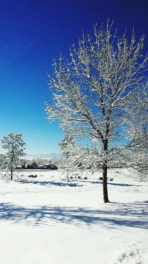 Snow ❄
