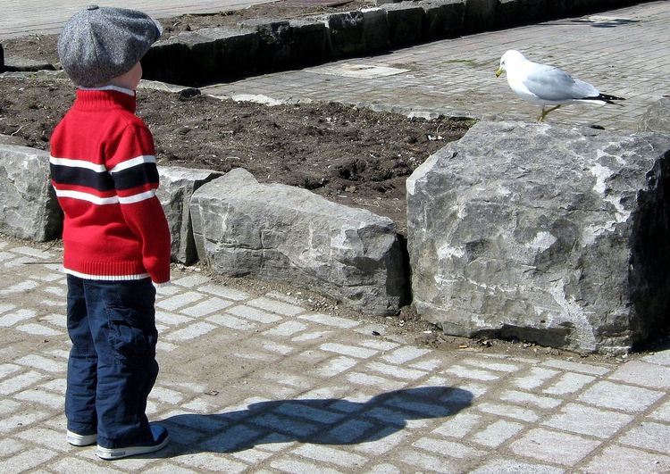 EyeEmNewHere Pigeon Boy Standoff Rear View Childhood ShadowSUMMER BREAK Long Goodbye TCPM The Street Photographer - 2017 EyeEm Awards Break The Mold Manvsnature  Man Versus Nature Man Vs Nature Manvsnature  Impending Summer