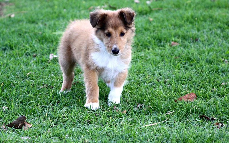 Close-Up Of Puppy On Grass