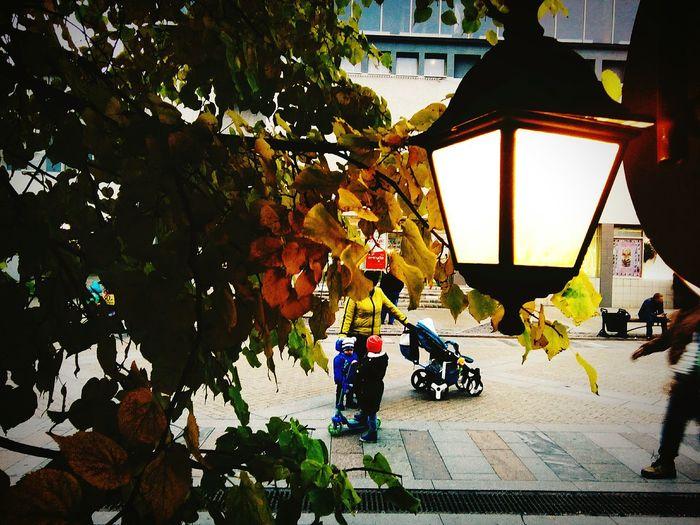 Tree Motorcycle