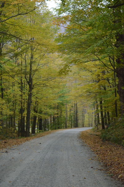 Tree Road Plant Direction Forest The Way Forward Land Transportation Day Nature Diminishing Perspective No People Beauty In Nature Tranquility Growth WoodLand Autumn Landscape Empty Road Scenics - Nature Outdoors Treelined Change
