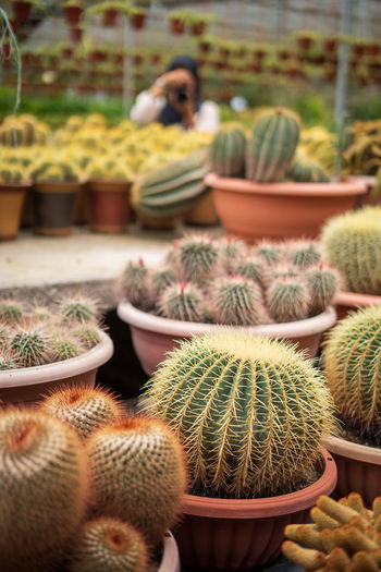 Close-up of succulent plants in greenhouse