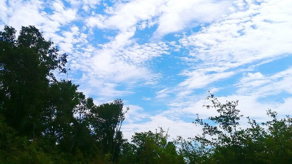Sky Cloud - Sky Low Angle View Tree Nature Beauty In Nature No People
