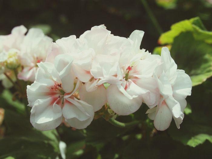 Flowerporn Flower Collection Flower