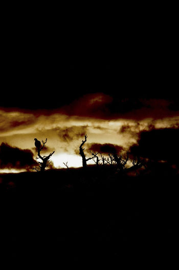 Fire of sunset Afternoon Animals In The Wild EyeEm Best Shots EyeEm Nature Lover Hungary Market Sunset_collection Animal Animal Themes Animal Wildlife Bird Copy Space Dark Fire Mammal Minimalism Nature Night No People Nopeople Outdoors Photography Silhouette Sky Sunset