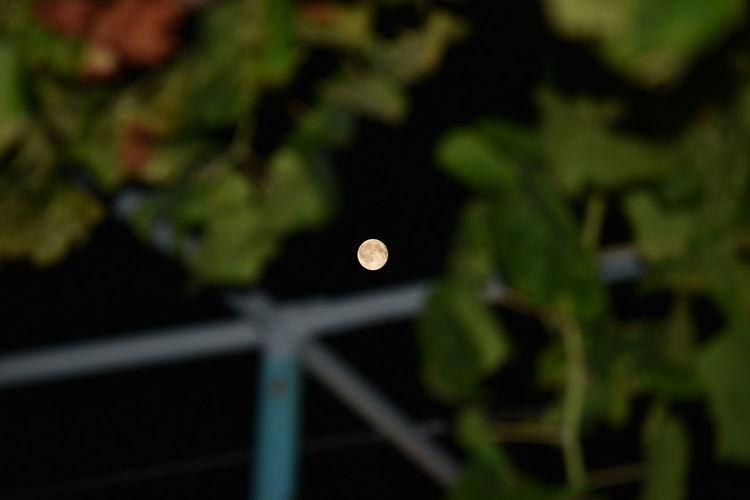 Close-up view of moon at night