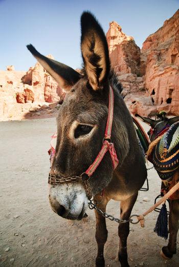 Donkeys standing on field