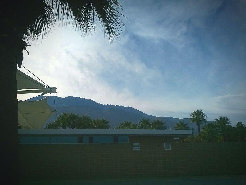 Palm Springs Desert Oasis California My Cali