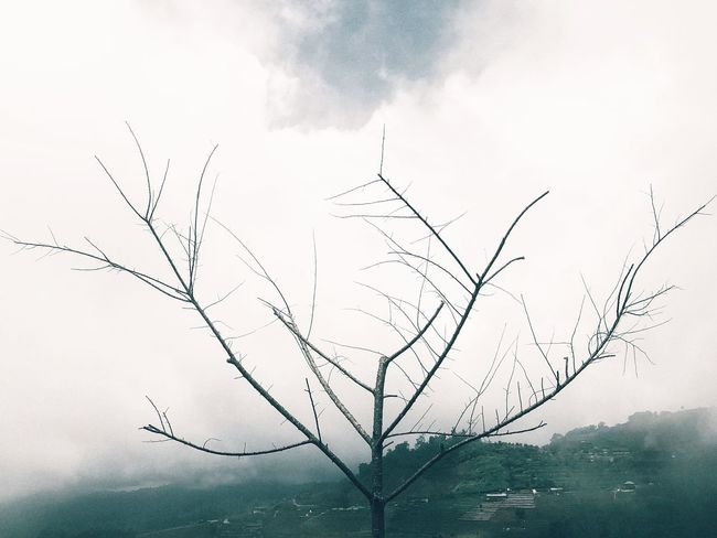 Growing blind Wildlife & Nature Naturelovers Nature_collection Mist Sky Nature No People Beauty In Nature Day Outdoors Tree