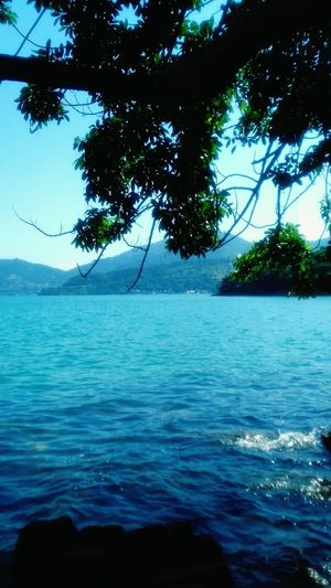 Tree Water Sea Branch Rippled Sky