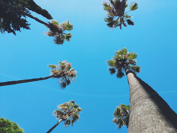 Palm Tree Summertime Summer Sunlight Tree Flower Blue Branch Sky Close-up In Bloom Plant Life Botany