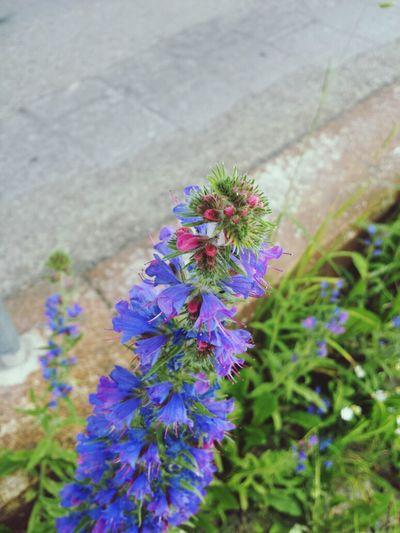 Flowers Jena Eyeem Natur Lover