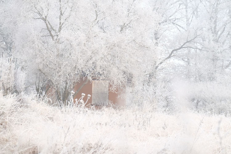 Beauty In Nature Cold Cold Temperature Garden Garden Shack Hoar Frost Nature No People Snow Tree Willow Tree Winter Winter Time Winter Trees Winter Wonderland