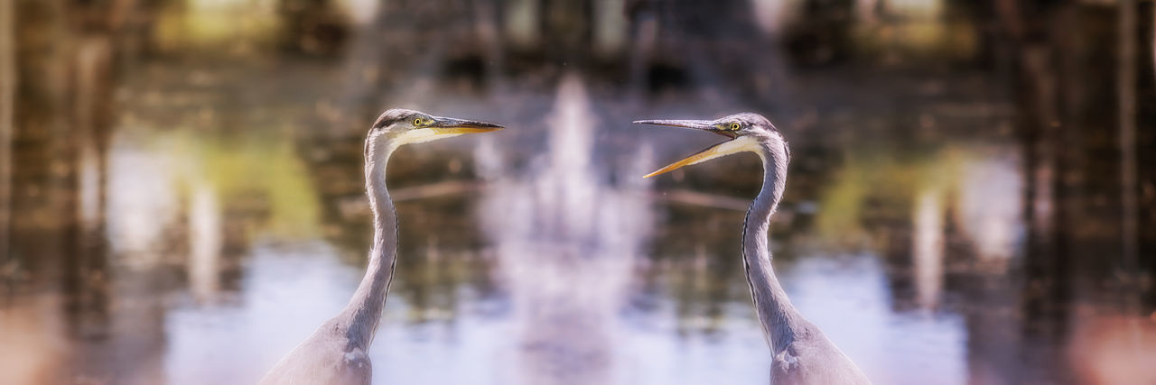 Animal Themes Animals In The Wild Bird Day Discussion Funny Birds Joke Nature No People Reiher Water