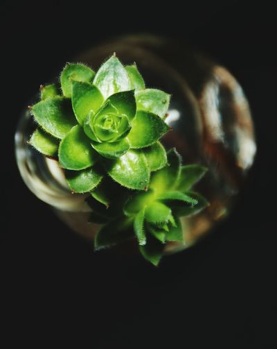 Close-up of green plant against black background