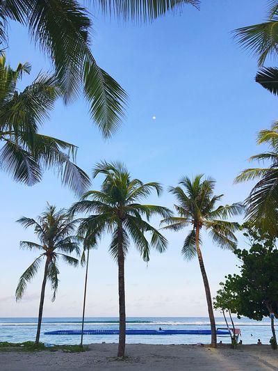 Beach, tree,