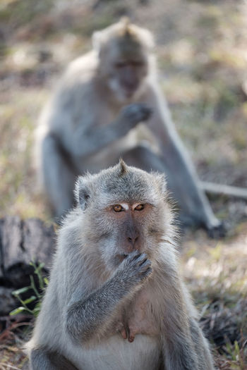Adult monkey in the baluran national park Animal Family Animal Wildlife Animals In The Wild Baboon Care Day Focus On Foreground Group Of Animals Looking Looking Away Mammal Nature Outdoors People Primate Sitting Two Animals Vertebrate Young Animal