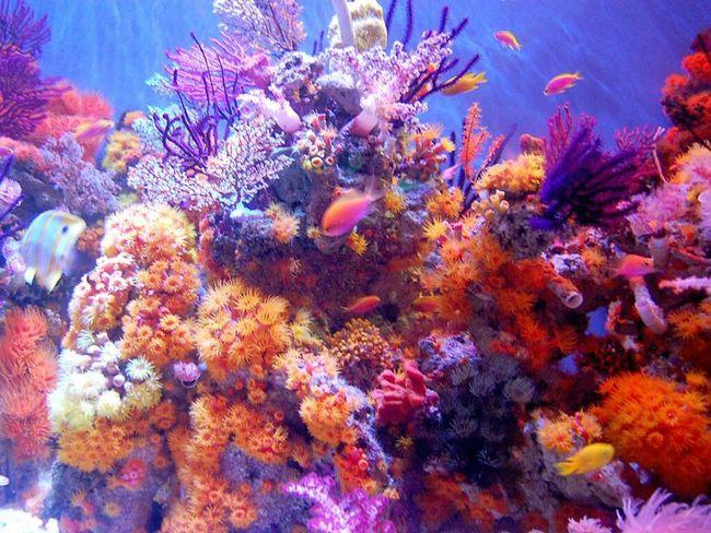Aquariumofthepacific Aquarium Fish Colorful