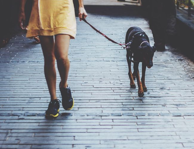 Dogs And Their Owners The Fashionist - 2015 EyeEm Awards The Street Photographer - 2015 EyeEm Awards EyeEm Best Shots Style From My Point Of View TwentySomething Elegance Everywhere Everyday Lives Fashion Forever Picturing Individuality Two Is Better Than One מייחיפה