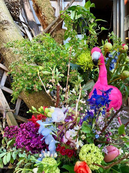 SPRINGTIME - can't get enough! Springtime In Berlin Pink Springtime Flowers Springtime Flamingo Bright Colors Colors Flowers Flowering Plant Freshness Pink Color Decoration