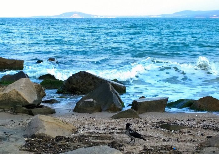 Lonely Bird at the Beach Beach Birds Coastline Geology Horizon Over Water Ocean Outdoors Physical Geography Rippled Rock Rock - Object Rough Sand Sea Seascape Shore Surf Vacation Vacations Water Wave
