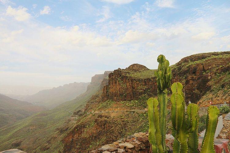 Landscape Beauty In Nature Mountain Travel Destinations Vulcano Island Vulcanic Landscape Green Nature Cactus Cactusflower Fog