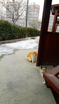 Adapted To The City Domestic Cat Outdoors No People Day Mesirealanı Mesireyeri Kediler Masum Bir Bakış. Yaralı ürkek Bir Kedi Gördüm Sanki Kis Mevsimi ... Piknik Göksu Park Ankara