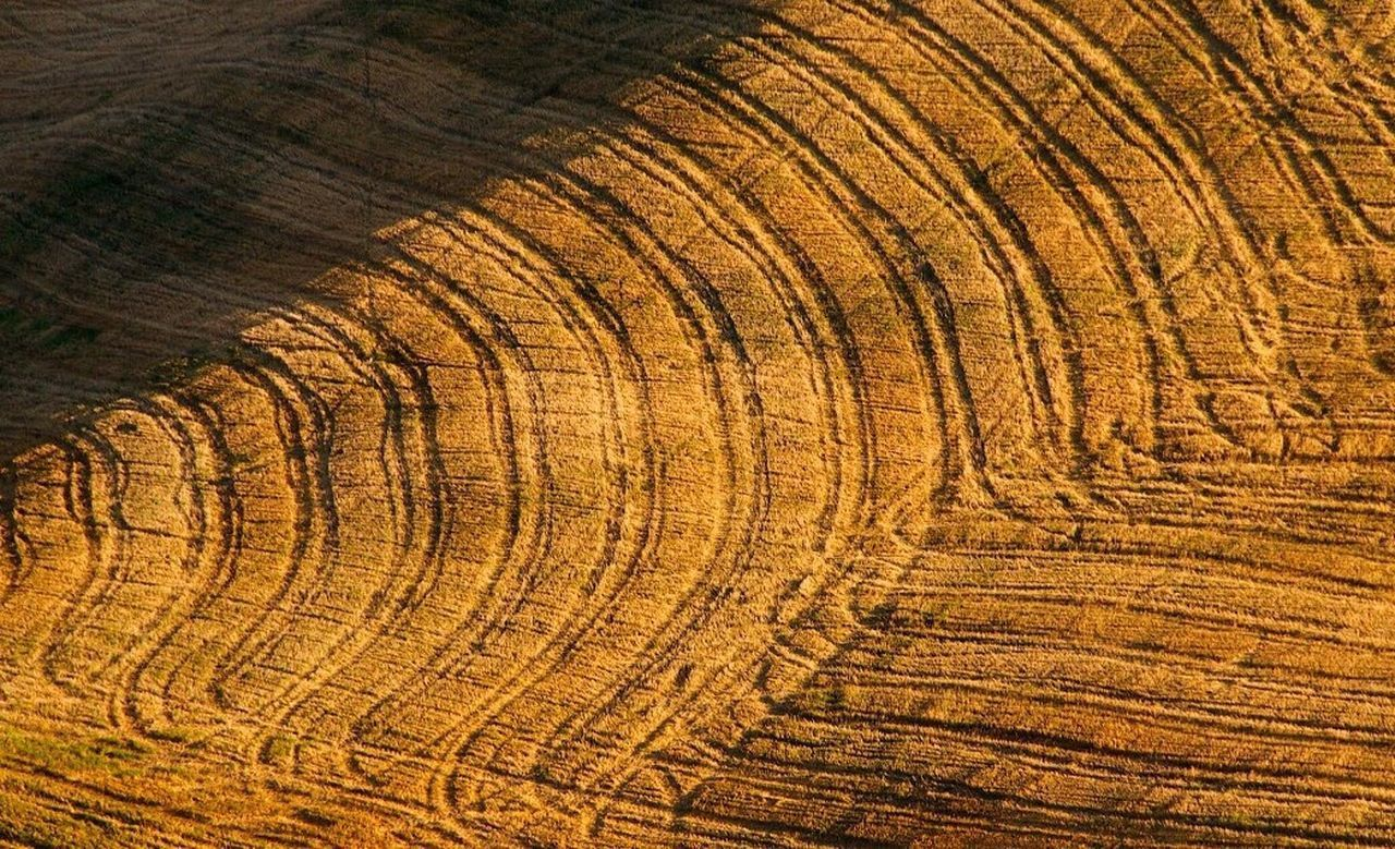 textured, backgrounds, nature, no people, rough, tree, close-up, full frame, pattern, tree ring, tree trunk, wood grain, plant, outdoors, concentric, day