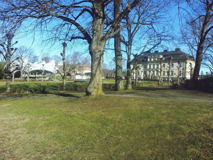 A sunny day. Spring Sweden