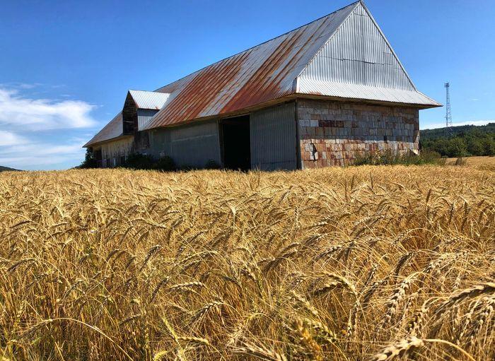 Farm Field Land