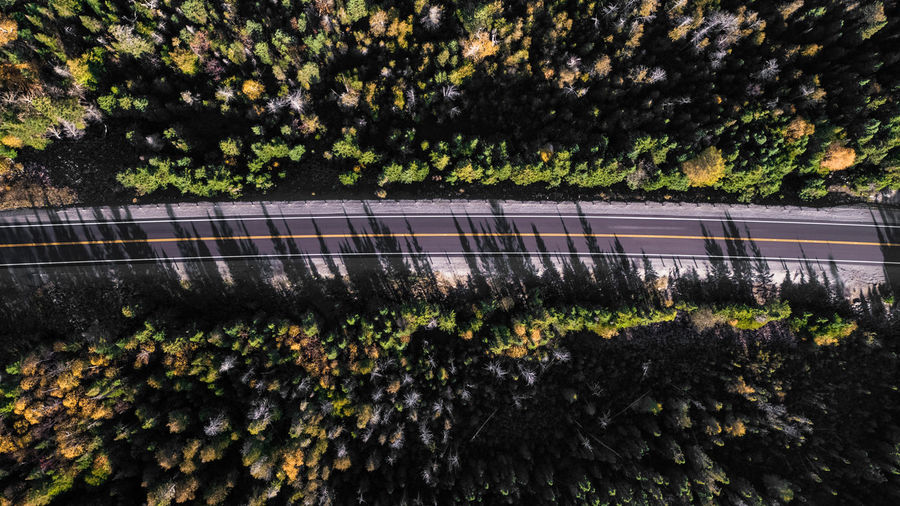 Growth Tree Plant Nature Forest Fall Color Wide Angle Aerial Travel Lost In The Landscape Wanderlust Natural Light Autumn High Angle View Roadtrip Road Landscape Wanderlust