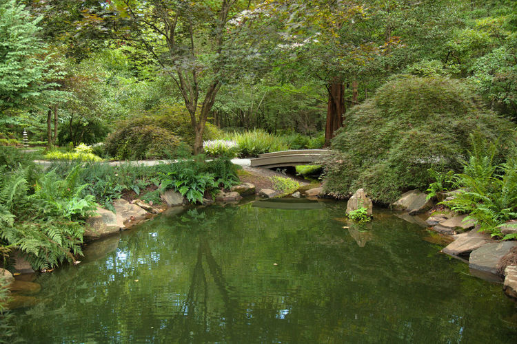 Japanese Garden Beauty In Nature Bridge Bridge - Man Made Structure Connection Day Footbridge Forest Formal Garden Nature Non-urban Scene Outdoors Reflection River Rock - Object Scenics Stone - Object Stream Tourism Tranquil Scene Tranquility Travel Destinations Tree Water Waterfront WoodLand
