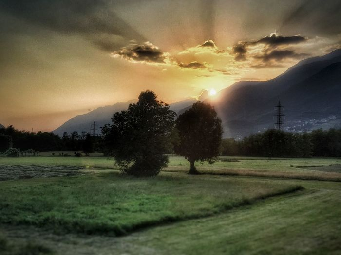 Tree Grass Sunset Nature Valtellina