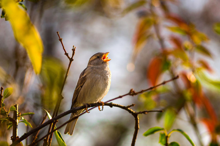 Hungary Bird Animal Birds Animals Animals In The Wild No People Tree Plant Nature Day One Animal Animal Wildlife Animal Themes Outdoors Close-up Beauty In Nature Selective Focus Bokeh Blurred Background Blur Autumn Autumn colors Autumn Leaves Branch