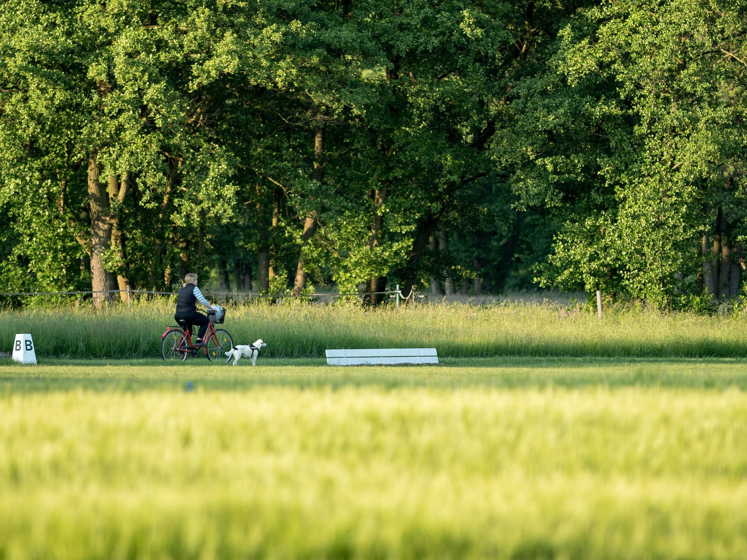 MAN RIDING BICYCLE ON FIELD BY TREES