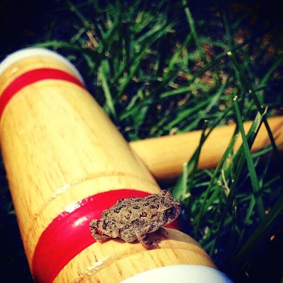 croquet is for everyone Macro Beauty Croquet Frog Treefrog Outside Croqueting  Mallet Red Little Things