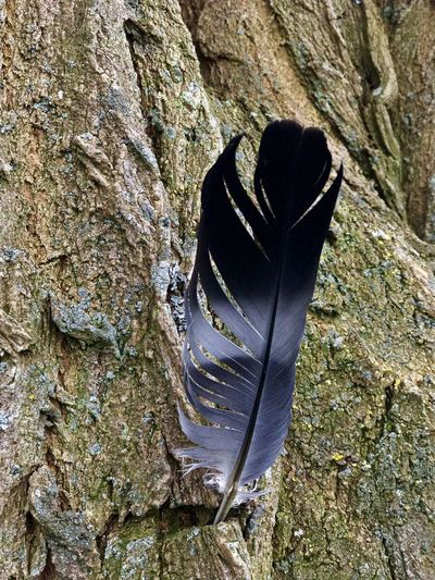 Feather on the tree 🇫🇷 IPhone Photography Iphonephotography IPhoneography Tranquility Tree Trunk Feather  High Angle View Day Nature Sunlight Outdoors