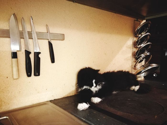 A cat to be cooked? Indoors  Humor No People Pets Mammal Knives