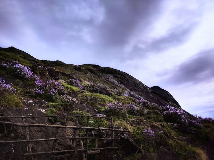 The Neelakurinji. This special flower is found in the hills of munnar, Kerala and is indigenic to the western ghats. It blooms only once every 12 years! And this picture is one of those special moments. Neelakurinji Munnar Kerala Tourism Flower Teampixel Wildlife & Nature Mood Getty Images Getty Getty+EyeEm Collection Morning Sky Eravikulam Moody Sky Landscape_Collection Wallpaper Mountain Tree Dramatic Sky Sky Landscape Cloud - Sky Blooming Flower Head Petal Storm Cloud Overcast Lightning Plant Life