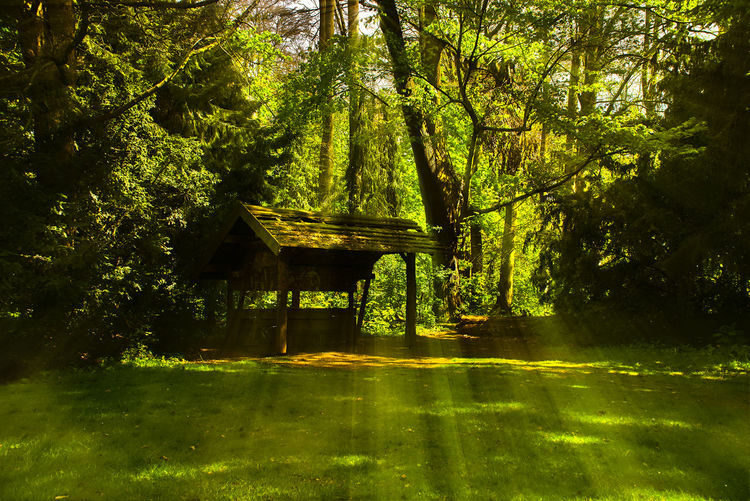Architecture Beauty In Nature Day Forest Growth Nature No People Outdoors Spring Sunshine Tranquility Tree Unterstand Volksgarten
