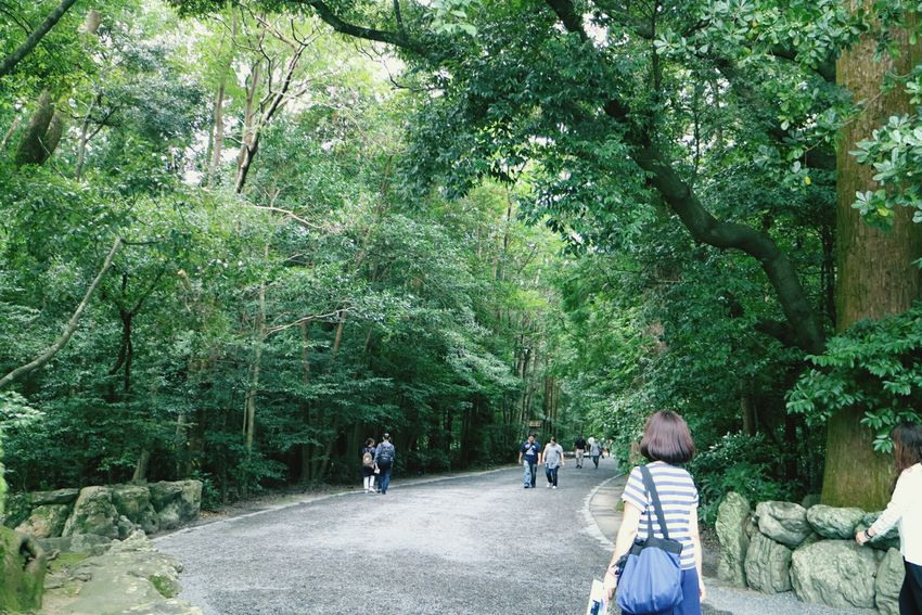 Japan Mie Grand Shrine Of Ise Geku Worshipping Trees Approach To Shrine