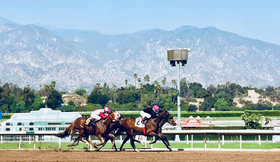 Horse Racing Competition Mountain Jockey Competitive Sport Outdoors Racetrack Thoroughbred Horses Track Running Horses Race Horses