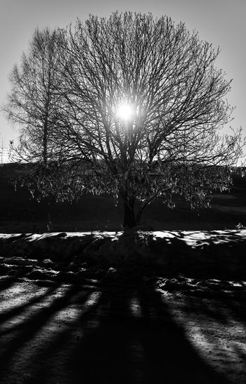 Silhouette bare trees against sky during winter