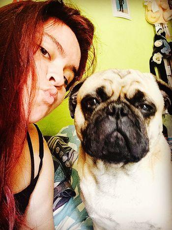 Te adoro❤️ Pug Life  Pug Chile Pug Pequeño Frank Pug Life ❤ Pug Love Ilovepugs