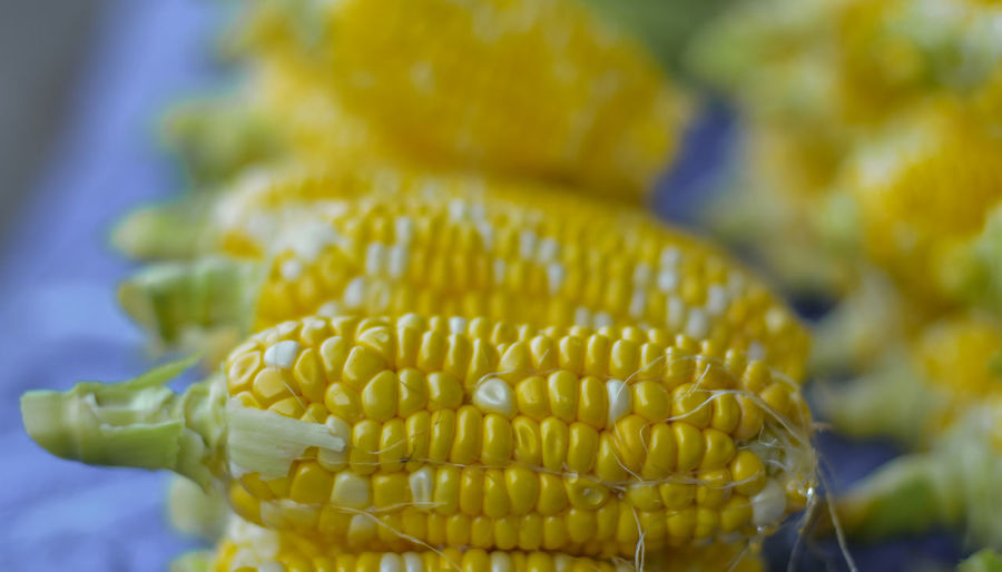 delicious fresh sweet corn EyeEm Selects Yellow Corn Business Finance And Industry Close-up Food And Drink Corn On The Cob Cultivated Land Organic Farm Rye - Grain Us State Plantation Sweetcorn Farm Vegetable Garden Agricultural Field Farmland Bale  Rice Paddy Hay Bale Farmer's Market Homegrown Produce Ear Of Wheat Agriculture Farmer Crop  Corn - Crop Harvesting Plough Organic